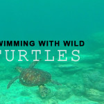 Swimming with wild turtles