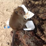 Monkey fun in Krabi Thailand