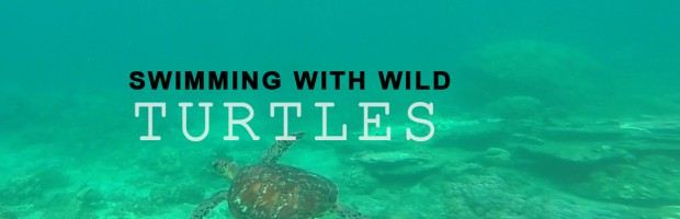Swimming, wild turtles, Dauin, Philippines, travel